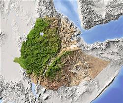 گاشاو طاهر، جوانی که توانستن را معنی بخشید: یک میلیون درخت برای اتیوپی